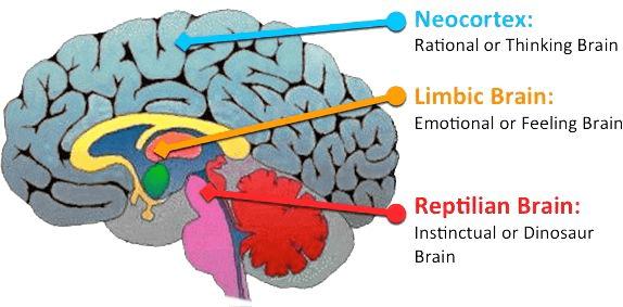 brain's response to junk food