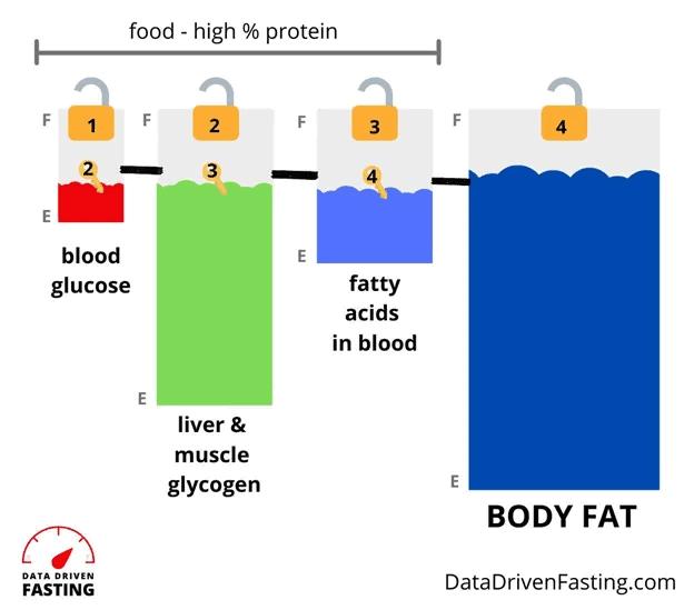glucose effect high protein diet
