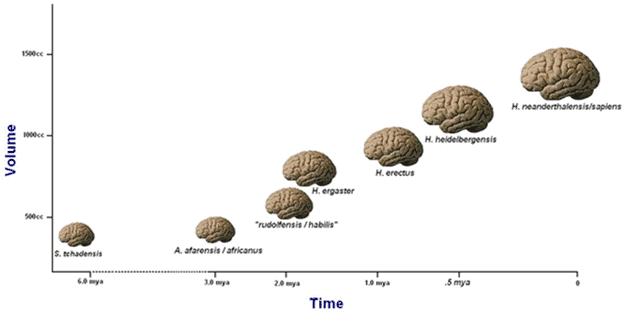 nutrients let us grow bigger brains